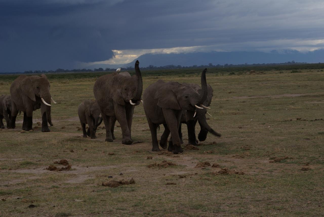 02 elephant