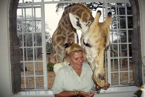 15 Feeding Giraffe