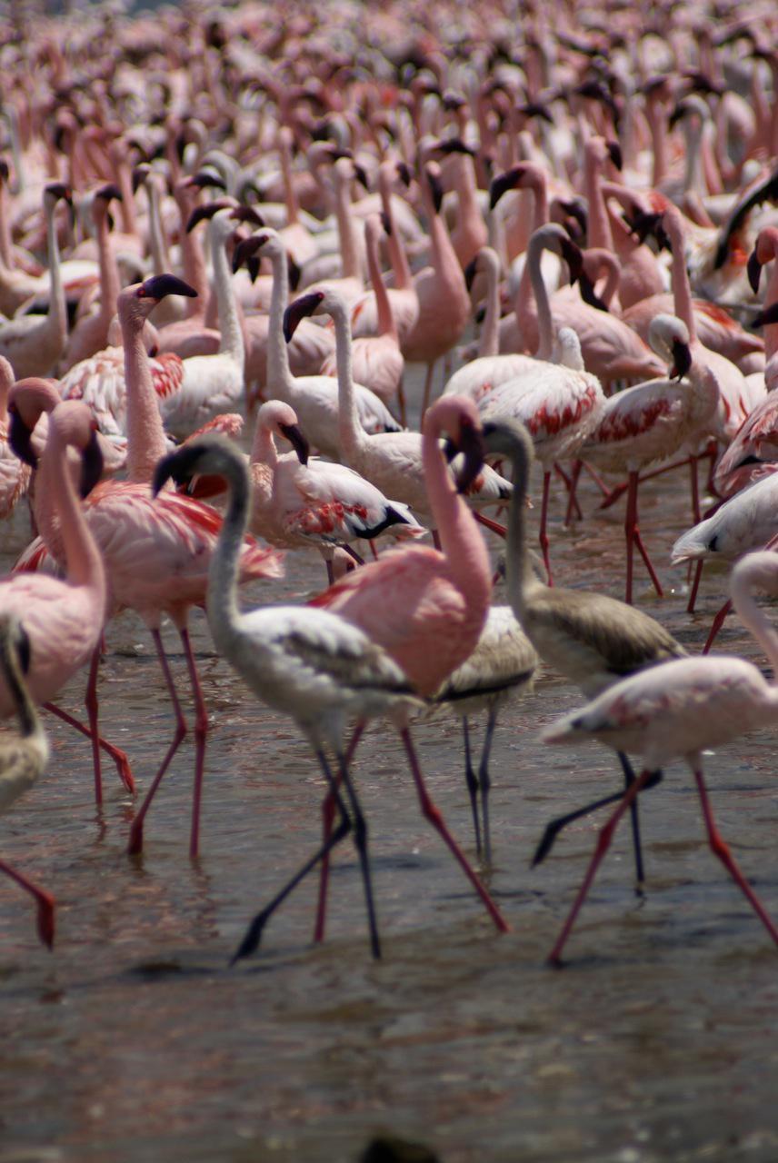 6 Lake Nakuru