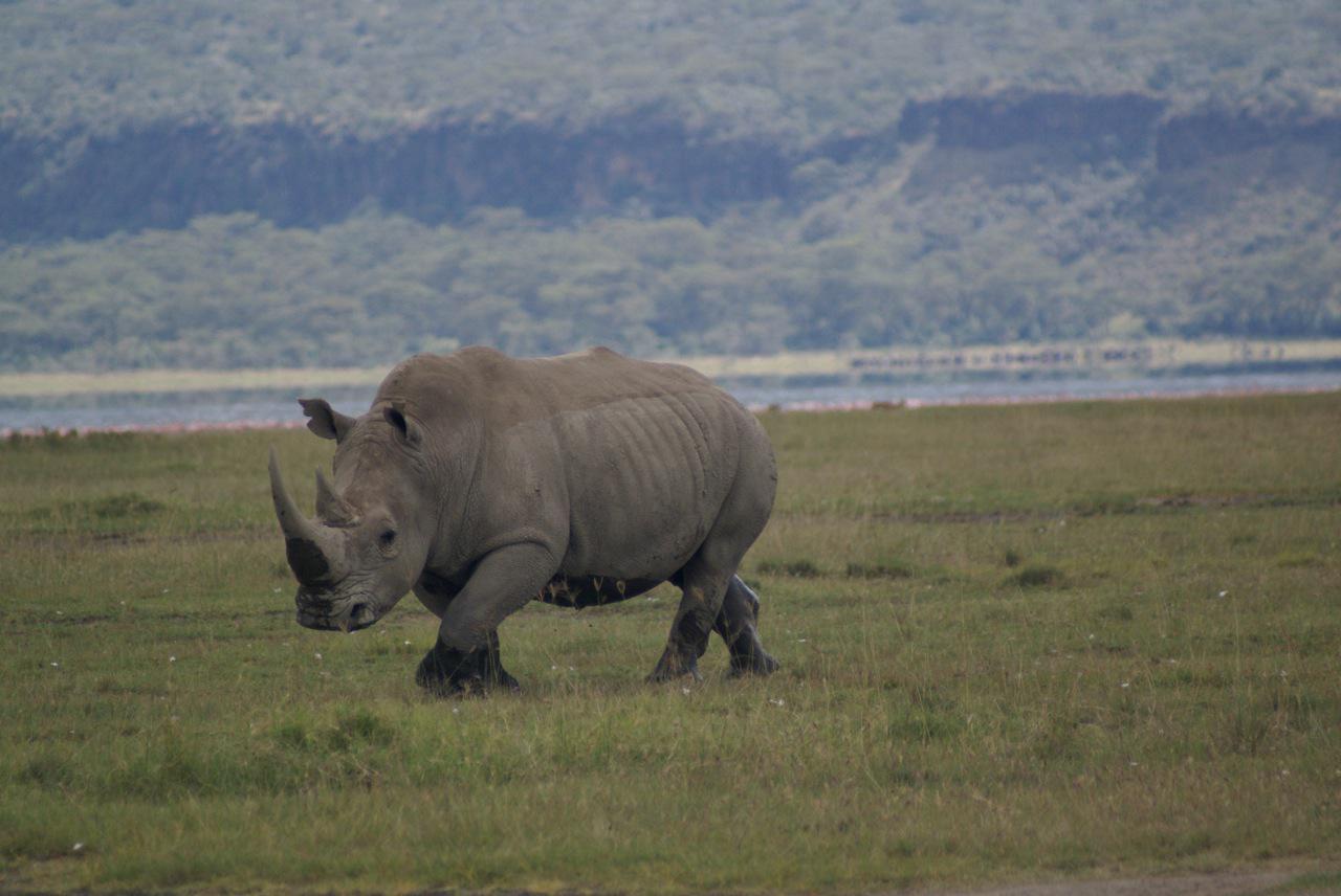 Day 7 Rhino