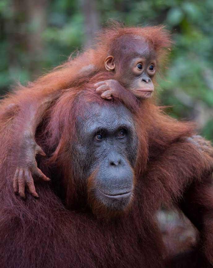 Borneo 2020 Enaja
